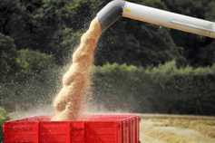 Grain prices driven down