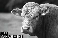 Beef management: reseeds