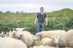 Mayo sheep farmer vaccinates against toxoplasmosis and enzootic abortion