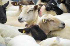 Northern comment: NI sheep sector at risk of being left behind