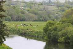 Overemphasis on agriculture when it comes to Ireland's water quality – IFA