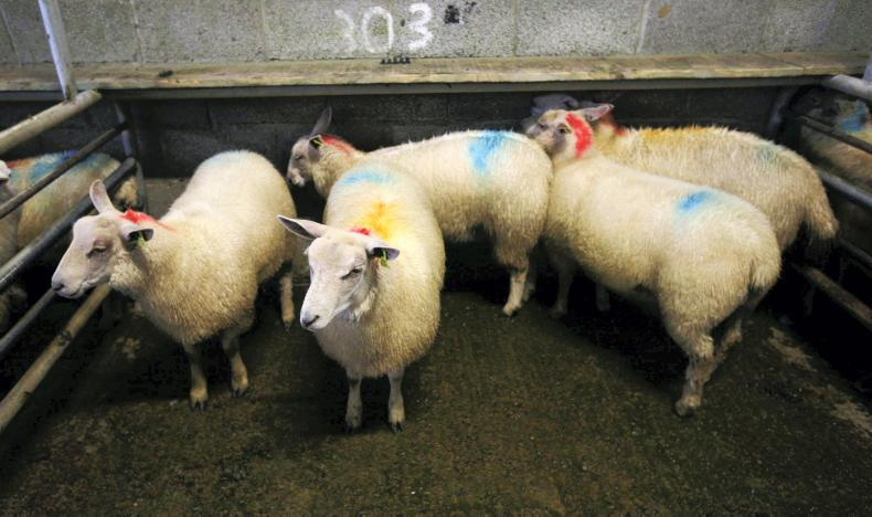 This pen of five ewe lambs, weighing 485.kg on average sold for €102.50 each.