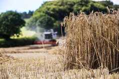 Harvest lingers as planting season begins