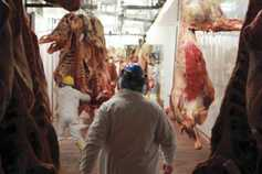 Beef prices: factories keen to get cattle