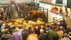Mart prices: 'serious cattle' and serious buyers at Gortatlea special sale