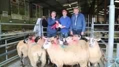 Sheep prices: ewe lambs sell to €149 at Mountbellew Mart show and sale