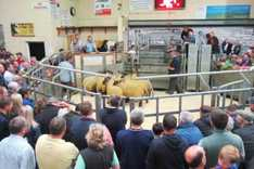 Record price at Ballymena sheep sale