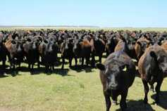Mercosur beef protest planned