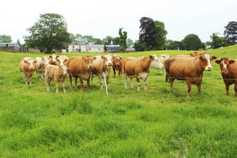 Seven tips for grazing heavy covers at this point in the season