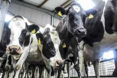 3.49p/litre loss on dairy farms