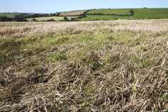 Up to 20% of straw crop still on the ground