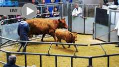 LIVE: from Thainstone Mart