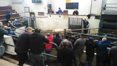 Mart prices: Charolais the king in Carrigallen