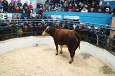 Mart prices: hit-and-miss trade at breeding heifer sale in Tuam