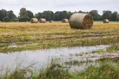 Straw price £13/bale in northeast