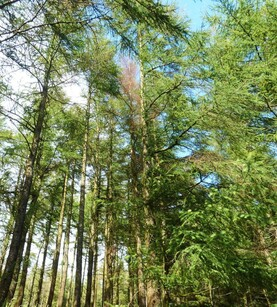 Farmers tell of crippling losses from ash dieback