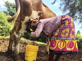 Farm businesses in Kenya to benefit from new agri-food strategy with Ireland