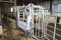 Scanning and weaning weights driving cow efficiency