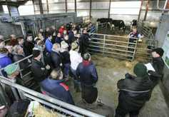 Listen: breeding the optimal cow in Co Down