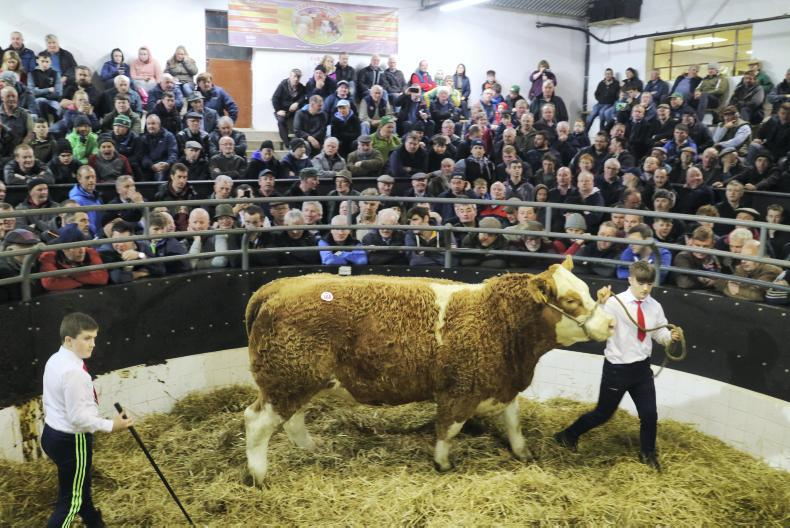 This large-framed heifer was sired by a son of CF52 and born to a Simmental dam. Born 3/2/15, she weighed a massive 1,040kg. She is due to EBY on 1 December and claimed the top price of €4,200.