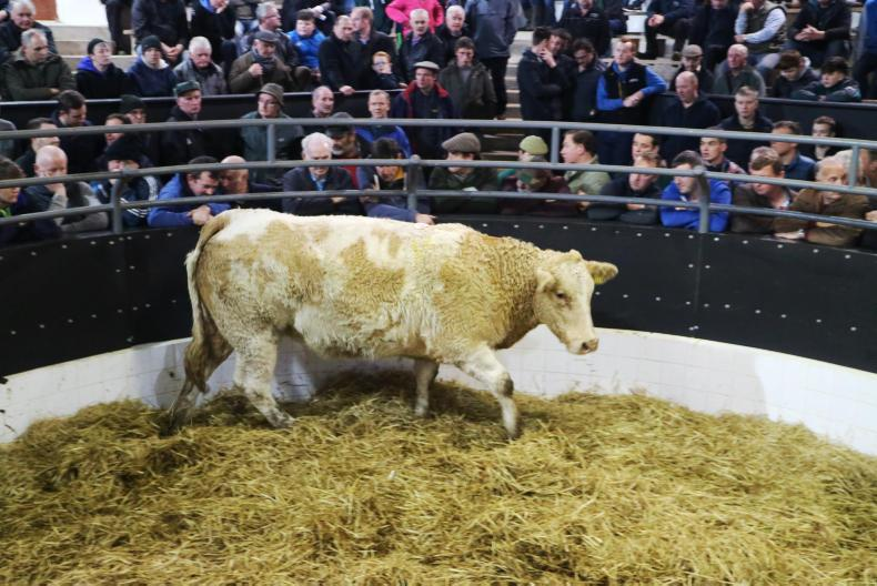 This orange and white Charolais cross heifer, born 26/3/15, weighing 705kg and due to calve on 2 December, sold for €1,700.