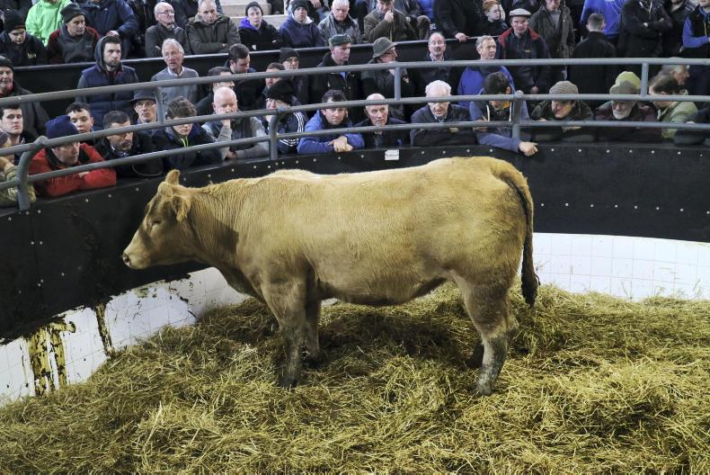 This Charolais heifer, born 20/4/14 and weighing 710kg is due to calve on 3 December to an AI Limousin sire. She sold for €1,520.