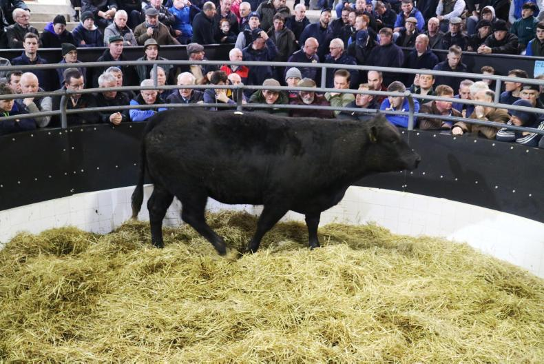 This super black limousin heifer, born 22/1/15 and weighing 845kg, is due to ZAG on 14 December and sold for €3,280.