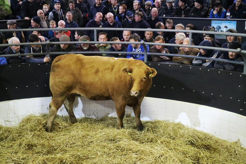 This Limousin heifer, born 12/2/15 and weighing 725kg, is due to Wilodge Joskins on 24 November. She sold for €2,050.