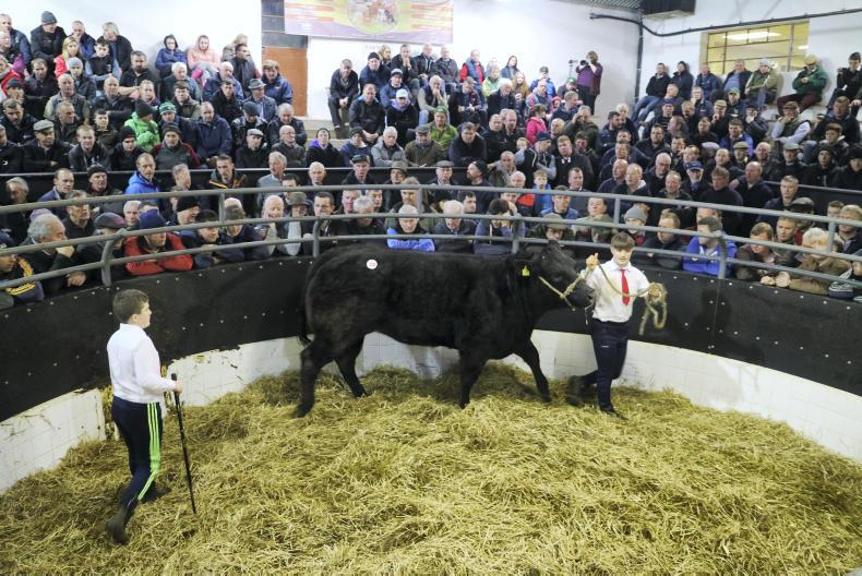 The second show heifer on offer weighed 785kg and is due to calve to EBY on 17 February 2018. She sold for €2,800.