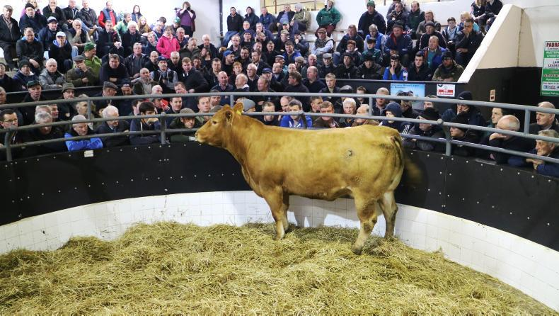 This super Blonde d'Aquitaine cross heifer weighed 870kg and is due to calf to the Limousin AI sire Cavelands Jolly. She sold for €3,000.