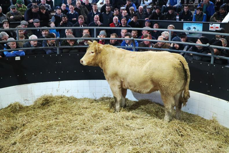 This large framed 775kg Charolais heifer, born 7/2/15 and due to calve on 19 December to GWO sold for €2,020.