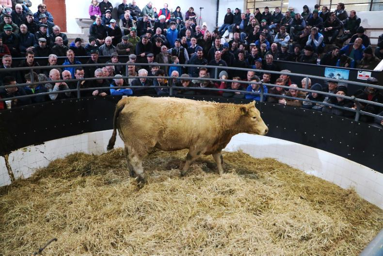This orange Charolais heifer, born 10/1/15 and weighing 805kg, is due to calve on 15 November to GWO and sold for €1,820.
