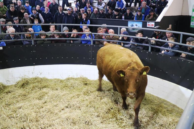 This red Limousin weighing 765kg was born 14/3/15 and possessed a €uroStar value of €86. She is due to calve on 15 November to an AI LM sire and sold for €2,400.