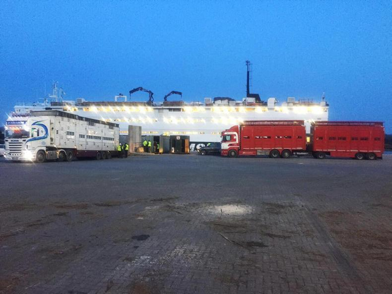 MV Sarah unloading Irish cattle in Mercin, Turkey.