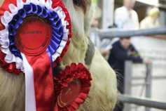 Charolais tops beef finishing trial