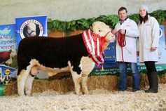 Corlismore and Herberry lead Hereford National calf show
