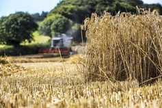 Ireland's tillage sector needs protecting – Hoey