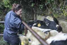 Six-hour bovine TB test being developed in England