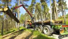 Role of forestry in the bioeconomy assessed