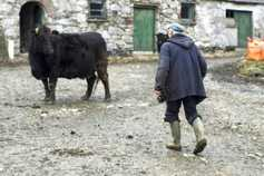 Report encourages older farmers to retire and pass on land