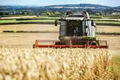 Future of Irish tillage sector is in diversity and direct payments