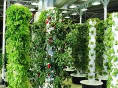 Agri tech: the up sides of vertical farming
