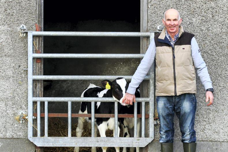 Padraig Ó Scanaill with some of his dairy heifer calves on his farm in Swords, Co Dublin. \ Ramona Farrelly