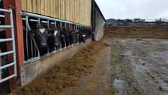 Dairy management: know your forage quality