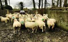 Farmer Writes: the real cost of gaining a fiver per head