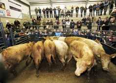 Over 4,000 cattle set to sail to Turkey