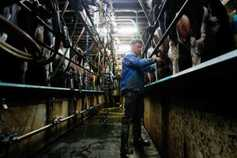 Co-ops hold milk price as PPI drops