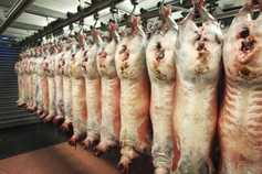 No change in lamb trade