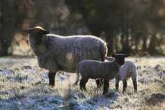 White Christmas? Farmers dream of a dry one