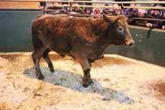 Beef trade finishes the year unchanged